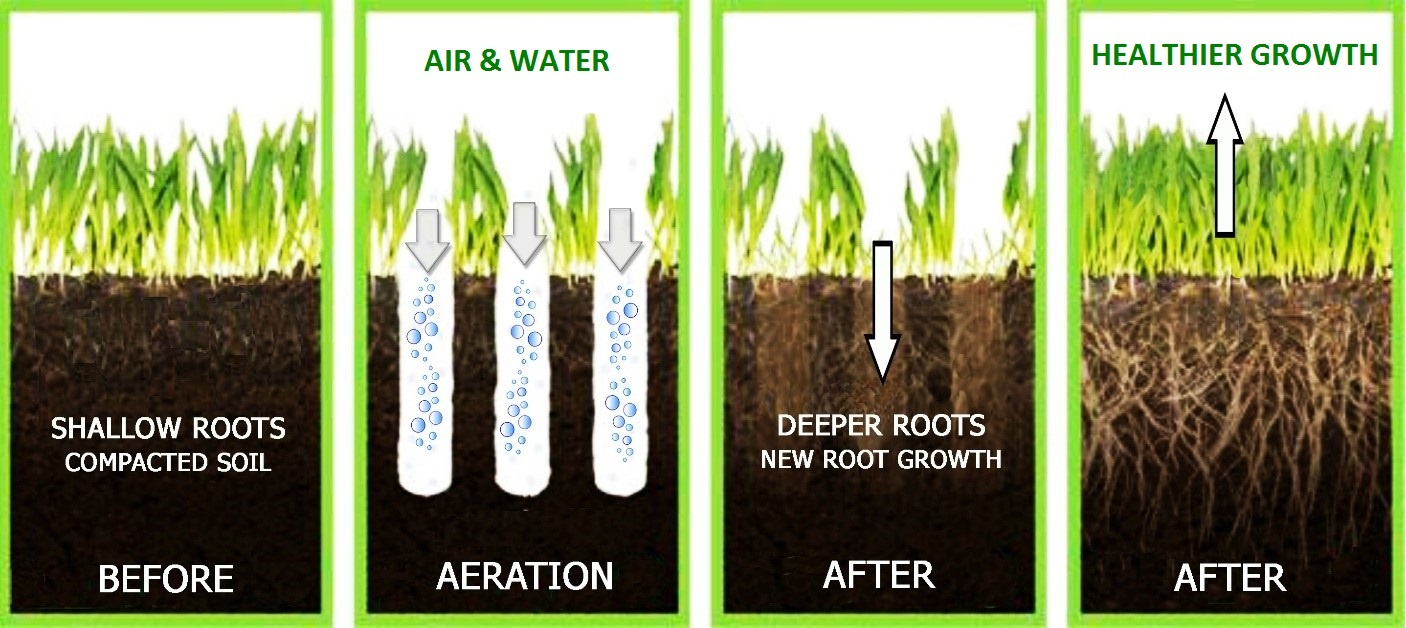 Soil Aeration In Grass