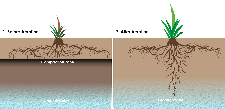 Effect of subsoil compaction on root growth & access to ground water