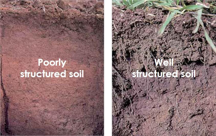 Poor v Well structured soils