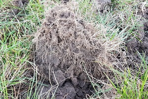 Effect of soil compaction (2)
