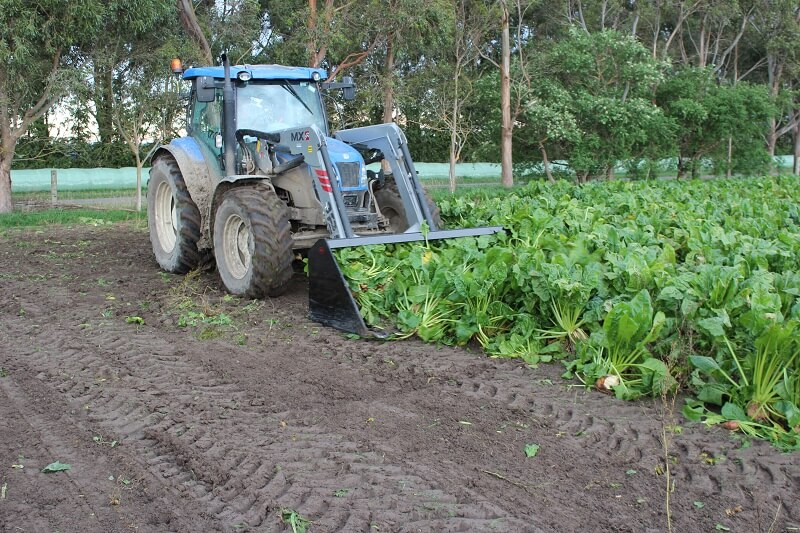 Beet Bucket harvesting root crops on a tractor front end loader