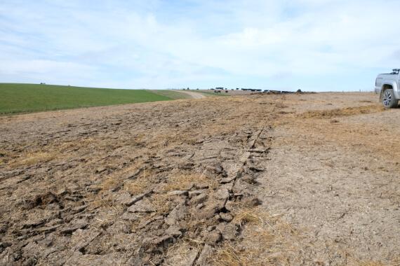 Cloddy Dirt