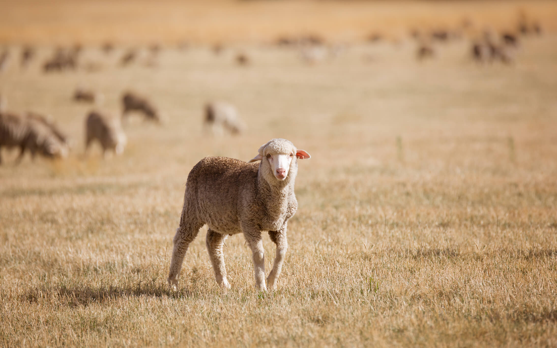 Farming tips to help you prepare for a summer dry spell